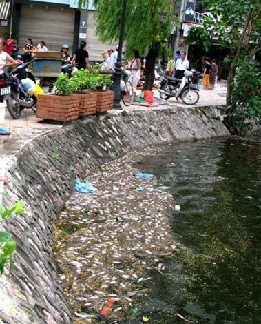 Vietnam Central Coast Fish Crisis